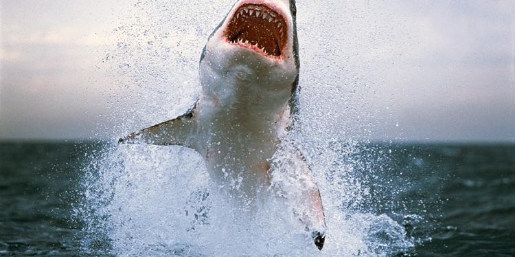 Wednesday 28/8/19…Shark Attack