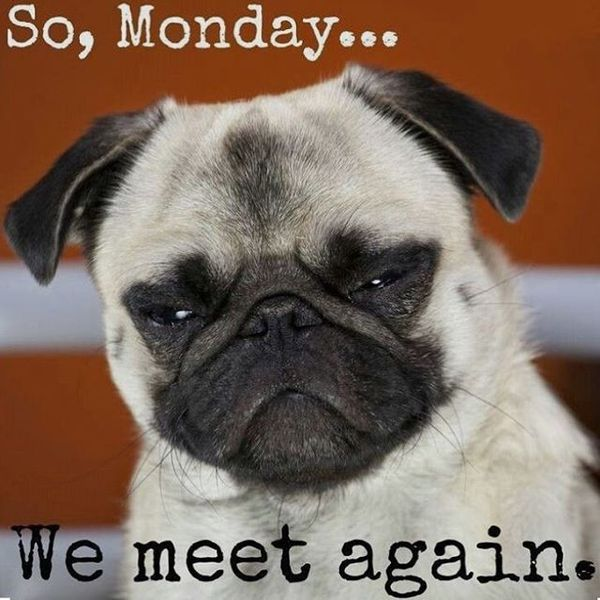 so-monday-we-meet-again