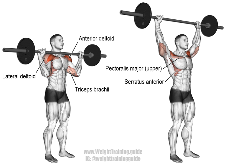 barbell-military-press